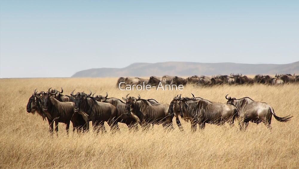 Some Members of the Wildebeest Migration, Maasai Mara, Kenya by Carole-Anne