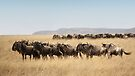Some Members of the Wildebeest Migration, Maasai Mara, Kenya by Carole-Anne
