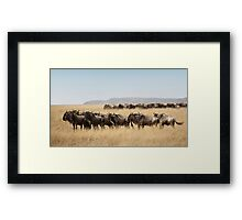 Some Members of the Wildebeest Migration, Maasai Mara, Kenya Framed Print