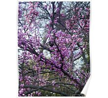 Beautiful Pink Blooms on Tree Poster