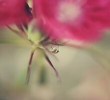 A Little Bit of Love by Laurie Search