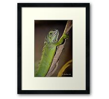 Holding on a tree Framed Print