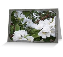 Apple Blossom Purity Greeting Card