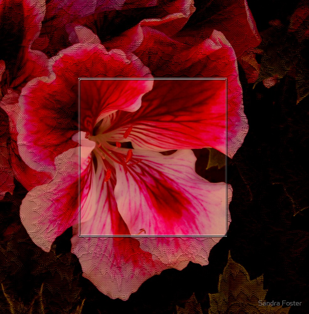 Lace Framed Blossom by Sandra Foster