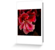 Lace Framed Blossom Greeting Card