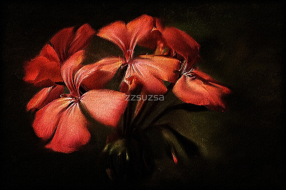 Geranium by zzsuzsa