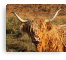 Harry Coo Canvas Print