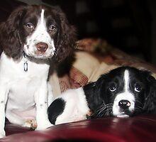 Benson and jess on sofa by Paul Morris