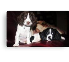 Benson and jess on sofa Canvas Print