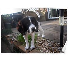 Benson my little Boy Poster