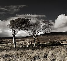Tree's Sally Gap, Co Wicklow, Ireland. by 2cimage