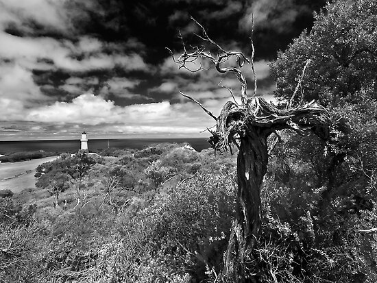 A view above Cape Schank by Andrew (ark photograhy art)