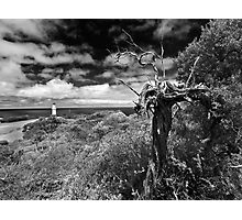 A view above Cape Schank Photographic Print