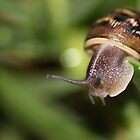 macro snail by Karl David Hill