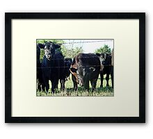 Is It The Papparazzi? Framed Print