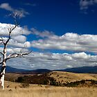 Tortured - Hamilton, Tasmania by clickedbynic