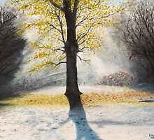 Frosty Glade - New Forest by Richard Paul