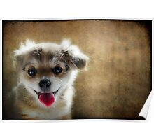 Happiness is a Little Puppy Poster