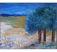 Blue trees Photographic Print