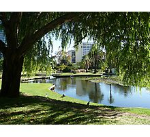 Willow Reflections, Queens Park WA Photographic Print