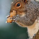 I'm nuts for nuts !  by Bine