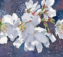 Cherry Blossoms by Marsha Elliott