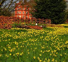 the Kew Palace with daffodils by supergold