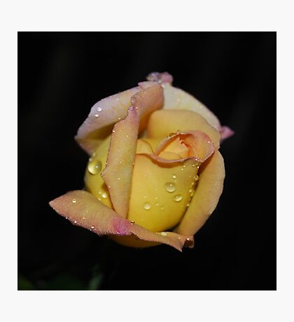 Fresh as the Morning Dew Photographic Print