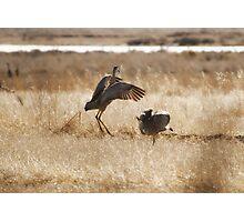 Monte Vista Sandhill Cranes 3 Photographic Print