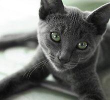 Grey Cat by Diana  Kaiani