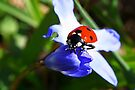 Lady on Spring Flower by Jo Nijenhuis
