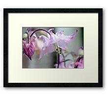 Fairy Lamp Framed Print