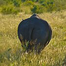 Rhino Poachers..... Kiss my Butt! (Rhinocerotidae - Ceratotherium simum) by DebbyTownsend