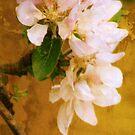 apple blossom iphone case by Sonia de Macedo-Stewart