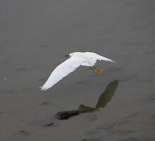 Graceful Flight by arr333