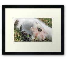 Talk to the Paw Framed Print