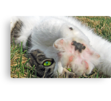 Talk to the Paw Canvas Print
