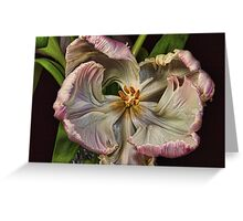Cabbage Tulip Greeting Card