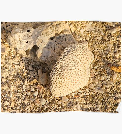 textured coral Poster