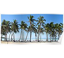 a row of palms Poster