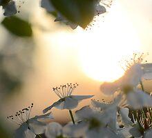 Late Eve Flowers 3.22.12 1  by Jason Franklin