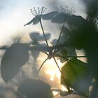 Late Eve Flowers 3.22.12 3 by Jason Franklin