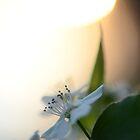Late Eve Flowers 3.22.12 4 by Jason Franklin