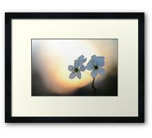Late Eve Flowers 3.22.12 7 Framed Print
