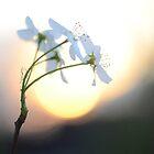 Late Eve Flowers 3.22.12 8 by Jason Franklin