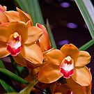 USA. Philadelphia Flower Show 2012. Some more orchids.  by vadim19