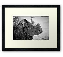 Black Rhino Framed Print