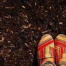 Shoes in the Mulch by Kerri Swayze