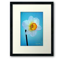 Daffodil Portrait Framed Print