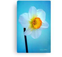 Daffodil Portrait Canvas Print